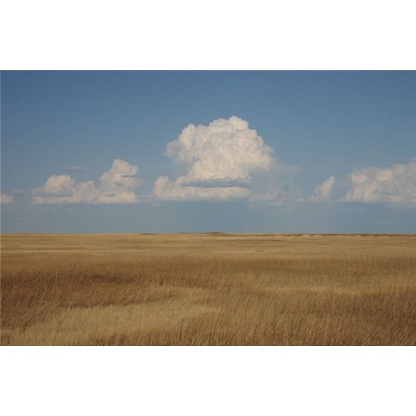800px-Cumulus Clouds over Yellow Prairie
