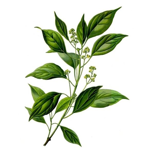 Is Camphor Harmful? Find Information on the Dangers of Camphor