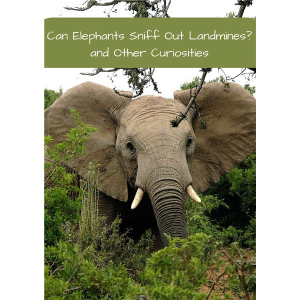 Little-Known, Fascinating Facts about Elephants
