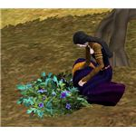 The Sims Medieval Wizard Collecting Herbs
