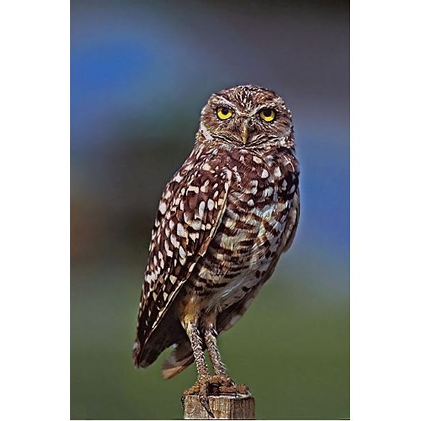 "Teaching ""Hoot"" in 6th Grade: Chapters 7-14"